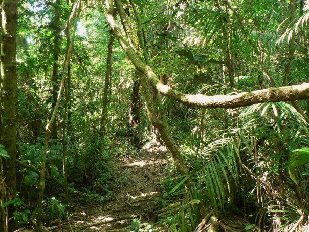 ayahusca peruánská džungle amazonie
